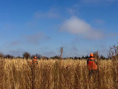pheasant hunting gregory county south dakota