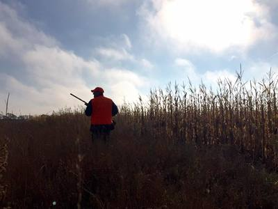 best pheasant hunting  guide service in south dakota